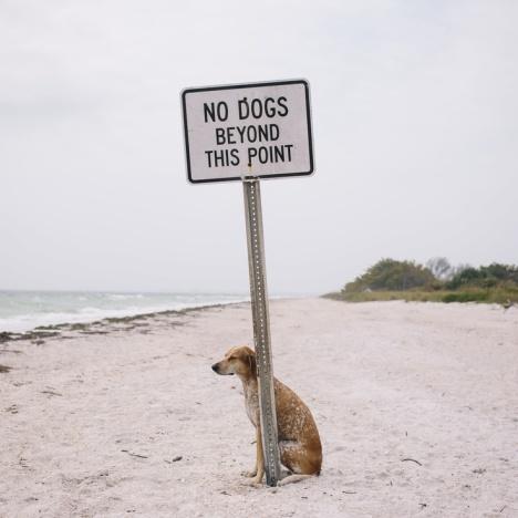 dogdesobedesça